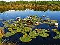 Serene Mountain Lake With Water Lillies (156843781).jpeg