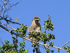 Serengeti National Park-108469.jpg