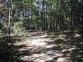Shelby Farms Memphis TN Trails eastern forest 04.jpg