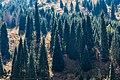 Shymbulak Ile Alatau Mountains in Almaty 06.jpg