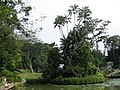Singapore Botanic Gardens, Symphony Lake 17, Sep 06.JPG