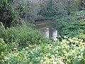 Small muddy pond - geograph.org.uk - 625255.jpg