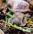 Snail, Nature.jpg