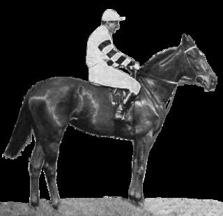 Snow Marten Irish-bred Thoroughbred racehorse
