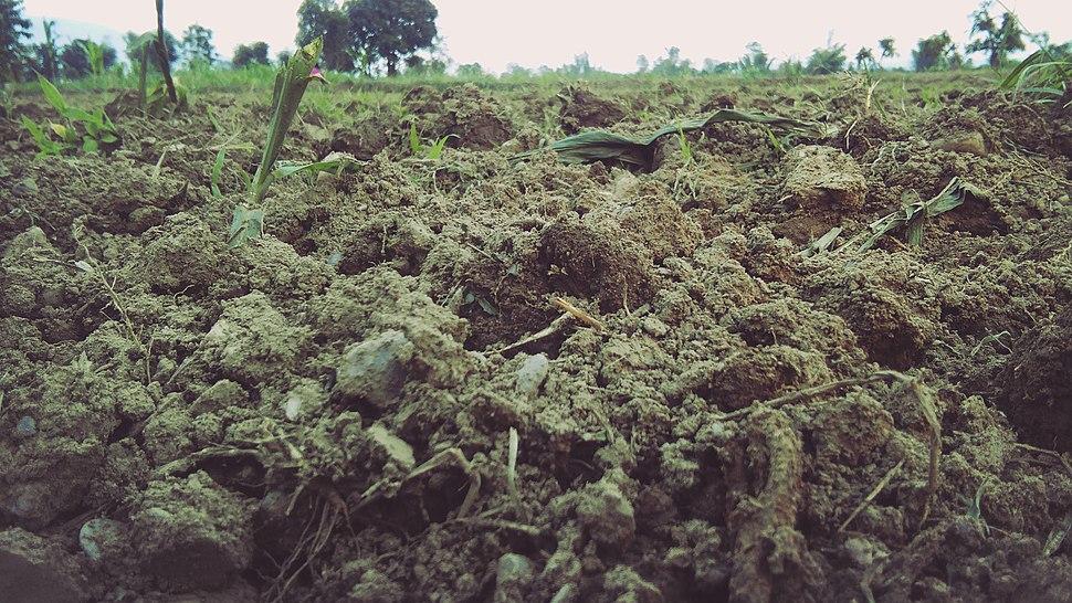 Soil - 2580 avi