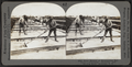 Solar Method of Evaporating Salt Brine -- Collecting, Draining, Hauling Sault, Syracuse, N.Y, by Keystone View Company.png