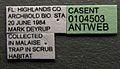 Solenopsis invicta casent0104503 label 1.jpg