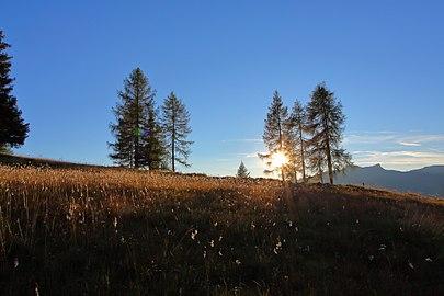 Sonnenuntergang bei den Zirben am Saukar.jpg