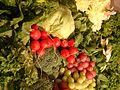 Spinach, grape, radish,curly leaf, iceburg lettuce, DSCF2088.jpg