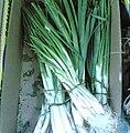 Spring-onion.jpg