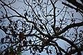 Spring-red-robin-tree - West Virginia - ForestWander.jpg