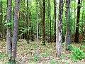 Springfield, VA, USA - panoramio (3).jpg