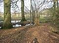 Standing water - geograph.org.uk - 1240587.jpg