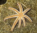 Starfish upside down.JPG