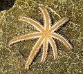 Starfish upside down.JPG