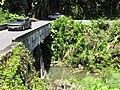 Starr-110330-4262-Costus speciosus-habitat view bridge-Keanae-Maui (24785882580).jpg