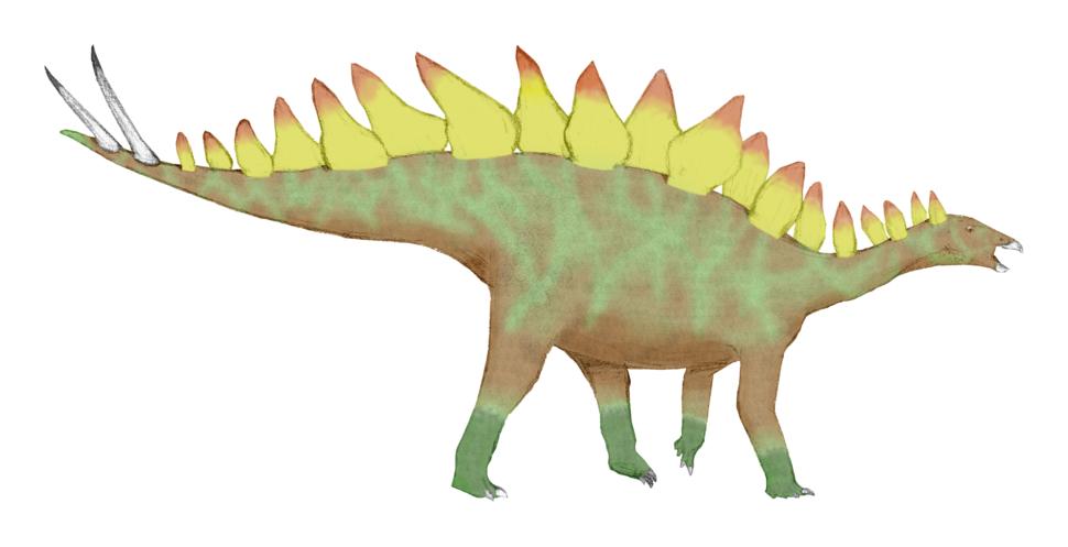 Stegosaurus ungulatus colored final