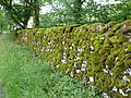 Stone wall near Malham Tarn 02.jpg