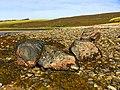 Stones - panoramio (8).jpg