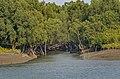 Sundarban's beauty 02.jpg