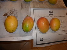 Sunset mango fruit.jpg