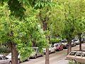 Suslu sokak1.JPG