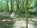 Sussex Border Path in Sandpits Wood - geograph.org.uk - 27105.jpg
