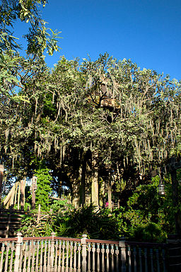 Swiss Family Robinson Treehouse 1