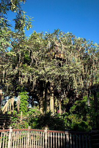 Swiss Family Treehouse - Image: Swiss Family Robinson Treehouse 1