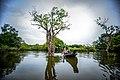 Sylhet ratargul swamp forest 2.jpg
