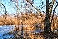 Tůně u Bohdanečského rybníka 06.jpg