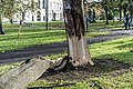 THE DAY AFTER OPHELIA VISITED DUBLIN (DAMAGED TREE IN KINGS INNS PARK)-133293 (37758524641).jpg