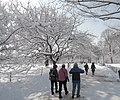 TWC northwestern Great Lawn sticky snow jeh.jpg