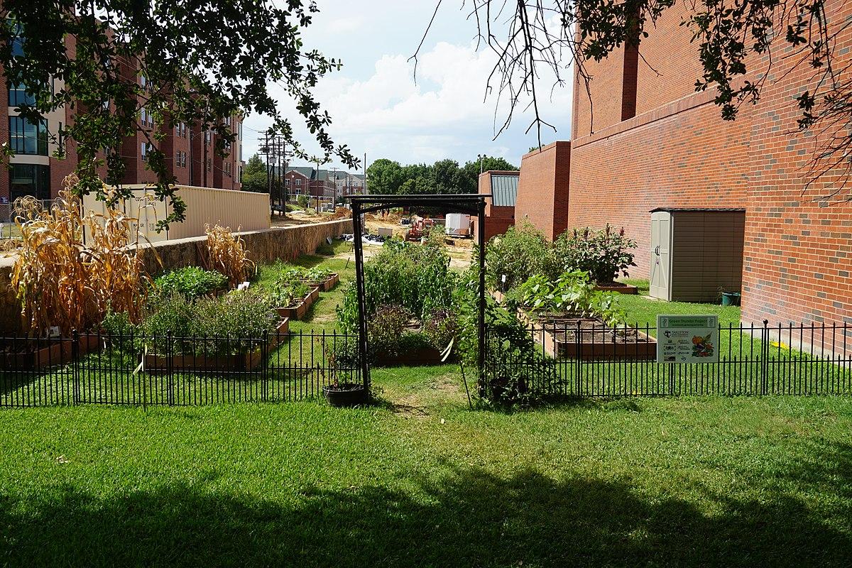 School Garden Wikipedia