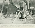 The American Museum journal (c1900-(1918)) (17974763009).jpg