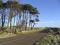 The B6348 at Ell Plantation - geograph.org.uk - 327294.jpg