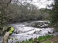 The Helford River - geograph.org.uk - 739978.jpg