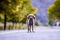 The Stray Dog.jpg