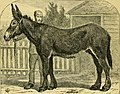 The book of the horse - thorough-bred, half-bred, cart-bred, saddle and harness, British and foreign, with hints on horsemanship; the management of the stable; breeding, breaking and training for the (20210129808).jpg