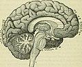 The brain as an organ of mind (1896) (14760990156).jpg
