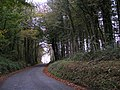 The brow of Haldon Hill, through the woods - geograph.org.uk - 1565601.jpg