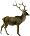 The deer of all lands (1898) Thorold's deer white background.png