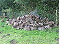 Timber pile in the orchard - geograph.org.uk - 508726.jpg