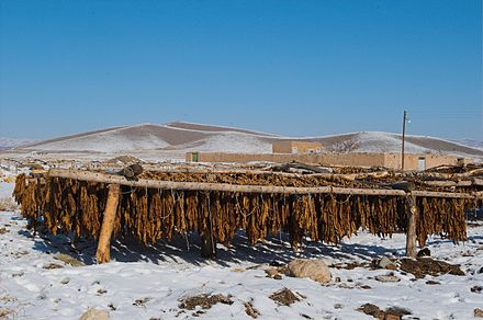 Sun-cured tobacco, Bastam, Iran Tobacco drying iran.jpg