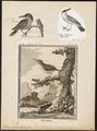 Todus viridis - 1700-1880 - Print - Iconographia Zoologica - Special Collections University of Amsterdam - UBA01 IZ16700313.tif