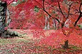 Tofuku-ji (4585775358).jpg
