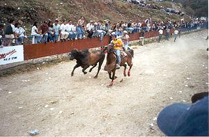 Coleo - Venezuelan Coleo: Llanero on horseback chasing cattle at high speed