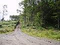 Track, Swinside - geograph.org.uk - 488457.jpg