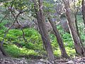 Trails of the galilee - panoramio.jpg