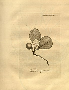 Transactions of the Linnean Society of London, Volume 10 - tab. 9.jpg